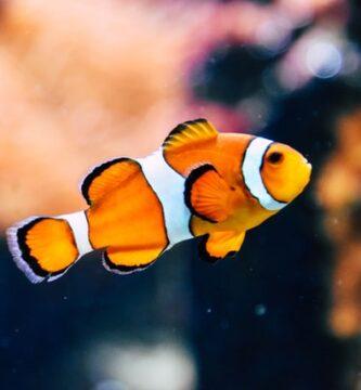 Las mejores marcas de comida para peces